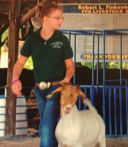 Freshman shows goats