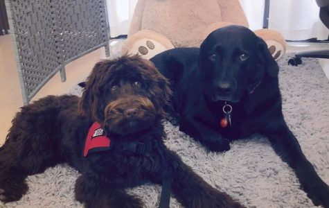 Therapy dogs could help students with ruff days