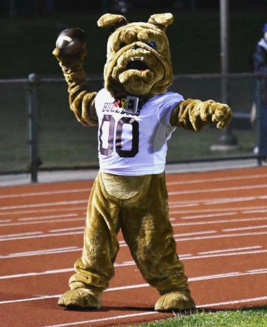In search of a DAWG-gone good mascot