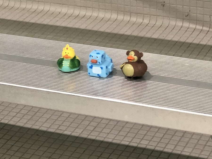 The top three winning ducks at the Nutquacker Suite! It was a tight race between the ducks.